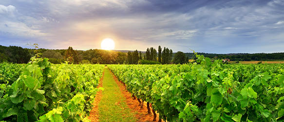 Schoenherr and Allen & Overy Advise on Horizon Capital's Exit from Purcari Wineries